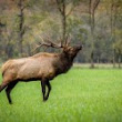 For Elk Hunting - Knowledge = Success | JACO Outfitters, LLC