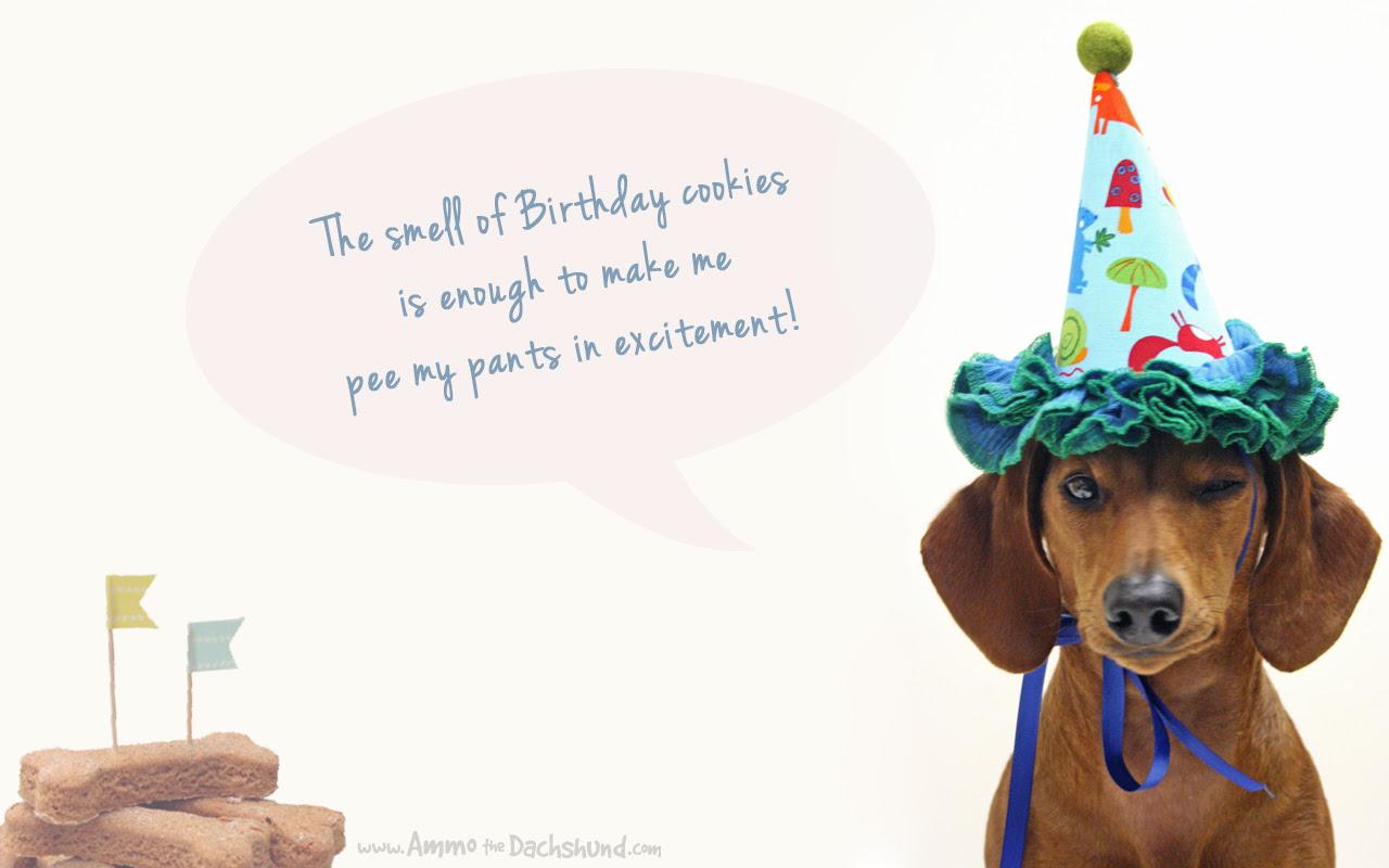 Birthday Week Desktop Wallpaper Download Ammo The Dachshund