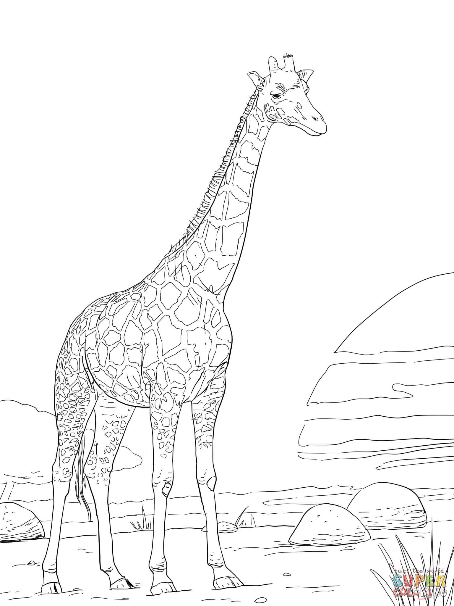 er sur la Girafe de Rothschild coloriages pour visualiser la version imprimable ou colorier en ligne patible avec les tablettes iPad et Android