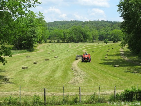 (28-19) We're some of the only people in the area who still put up small square bales of hay - FarmgirlFare.com