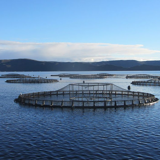 'We damaged World Heritage Area', salmon company claims