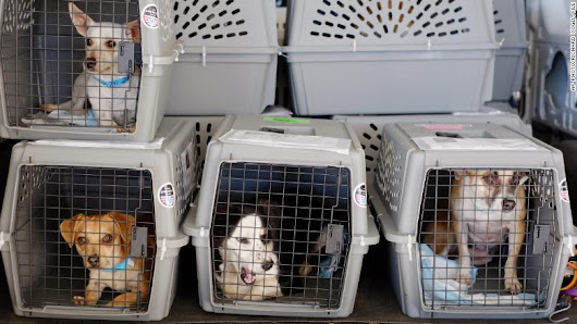 United suspends pet cargo flights - Mar. 20, 2018