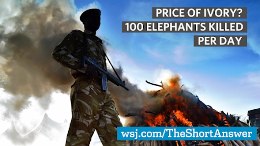 Price of Ivory? 100 Elephants Killed Per day