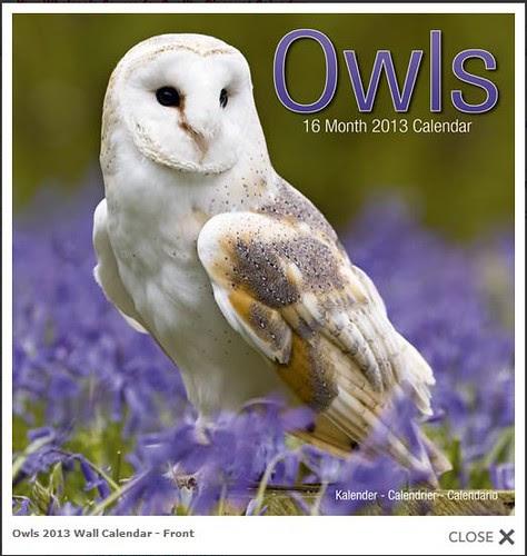 Avonside Owls Calendar by Megan Lorenz