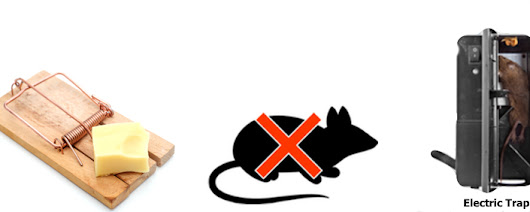 Rodent Control Strategies | Safe Rodent Control