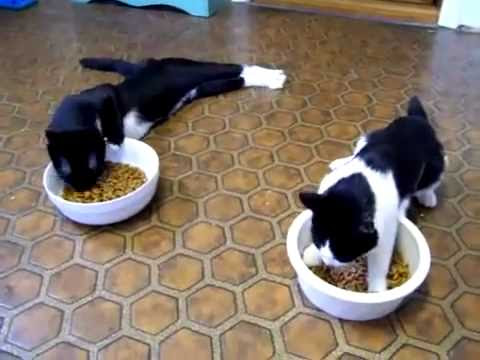 video que muestra a unos Gatos Anestesiados