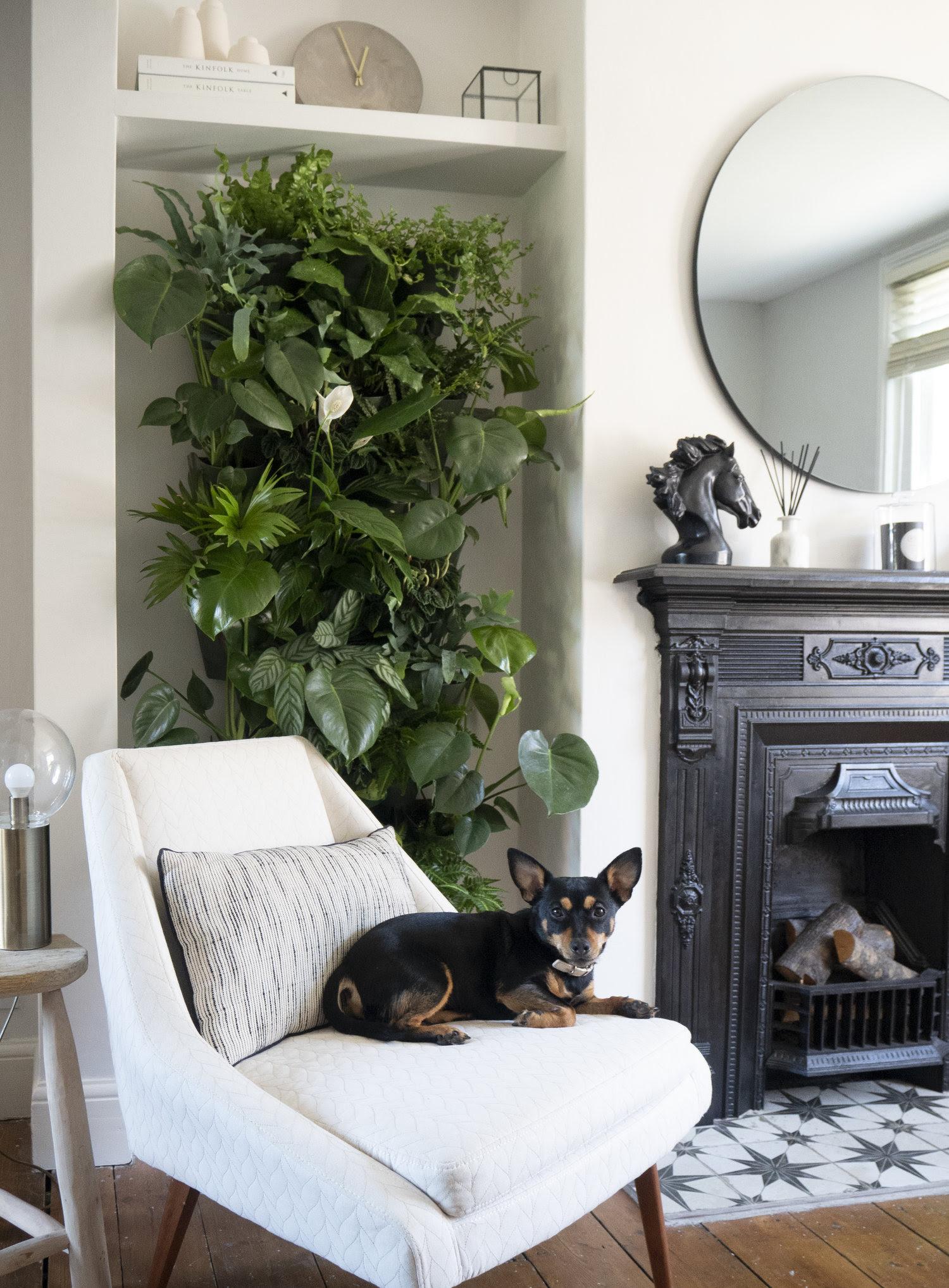 How I Built An Indoor Living Plant Wall Luke Arthur Wells