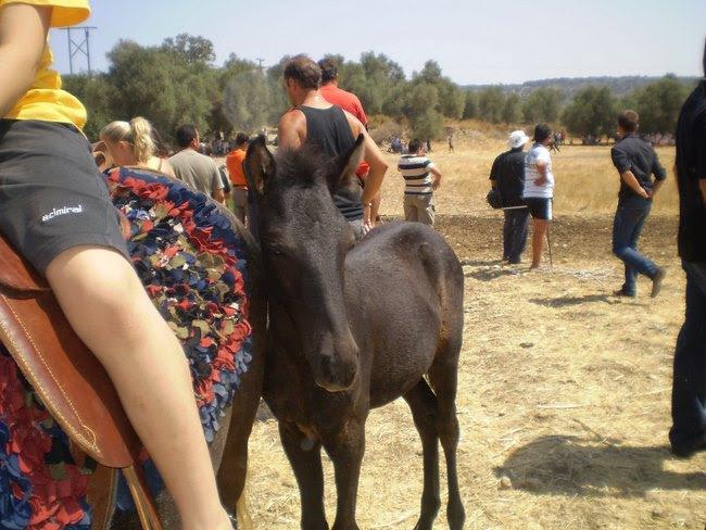 Η αρχαιότερη ευρωπαϊκή ράτσα αλόγου ζει μόνο στην Κρήτη εδώ και χιλιάδες χρόνια