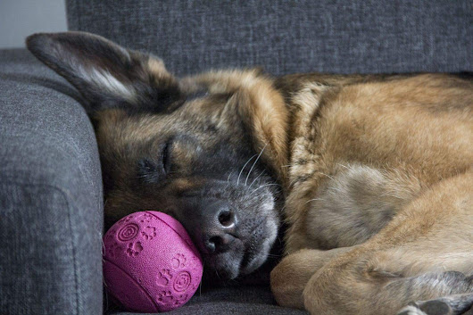 Have Trouble Sleeping After A Bad Day? Your Dog Does Too! - Dog Files