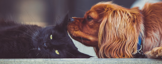 Debunking 7 common cat and dog myths, naturally!