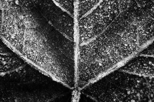 365 days | 330 | leaf