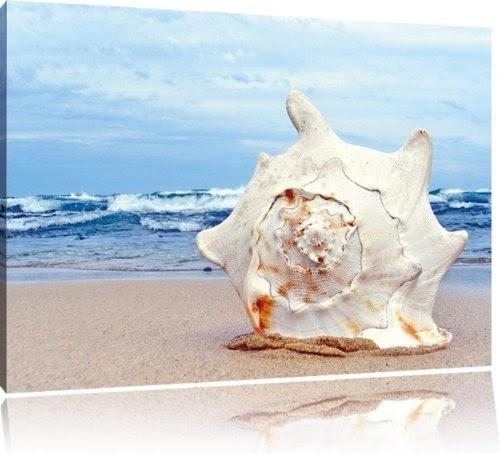 Grande conchiglia sulla spiaggia di pittura su tela for Piccoli disegni di casa sulla spiaggia