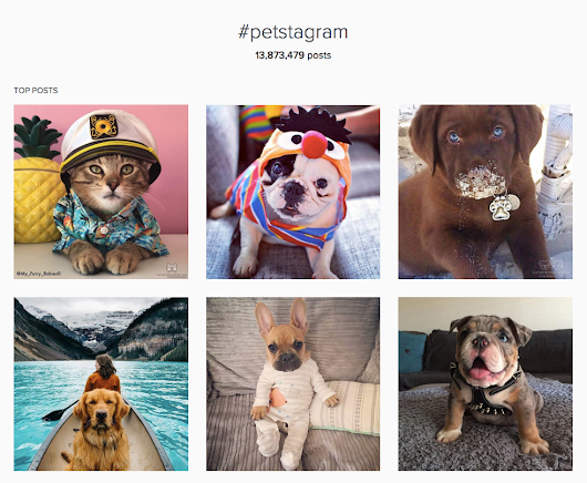 How to Get to Know Popular Instagram Communities