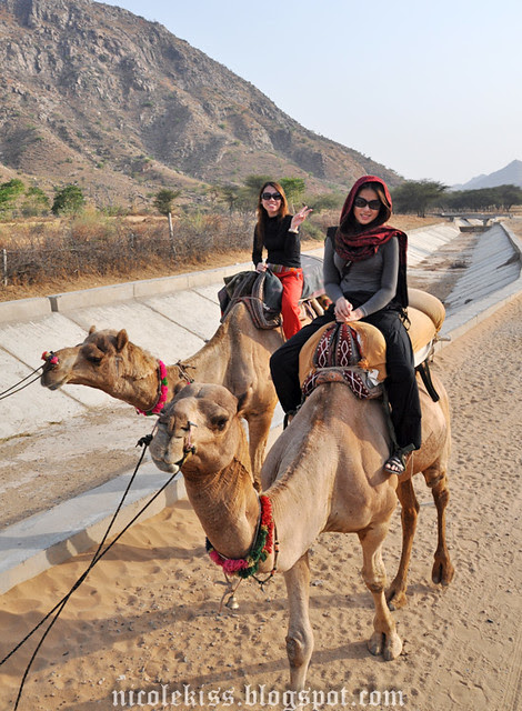 camel riding in india