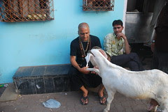 The Hand Shaking Goat of Bandra Bazar Road by firoze shakir photographerno1