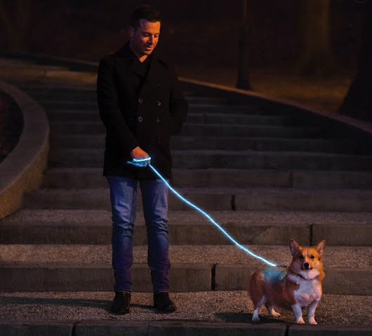 You and Your Dog Will Light Up the Night with Nitey Leash • GearDiary