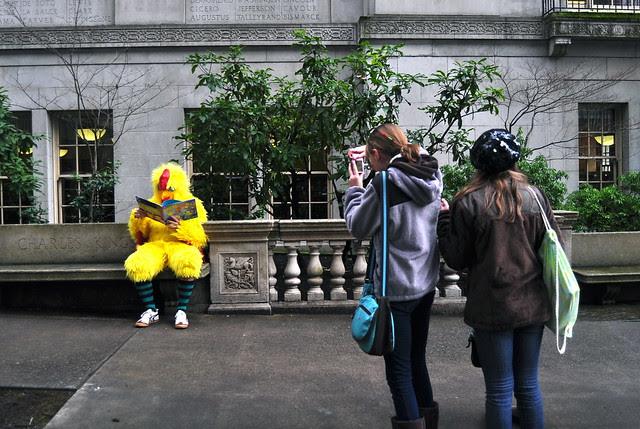 Chicken admirers