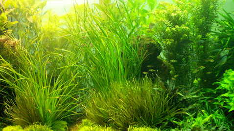Aquaworld Aquarium - Article - Anaerobic Bacteria in Freshwater Aquariums - The Often Incorrectly Vilified Beneficial Bacteria