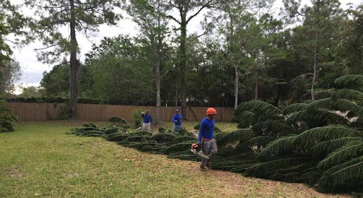 Tree Removal In Jupiter FL - Call (561) 517-9554 Today