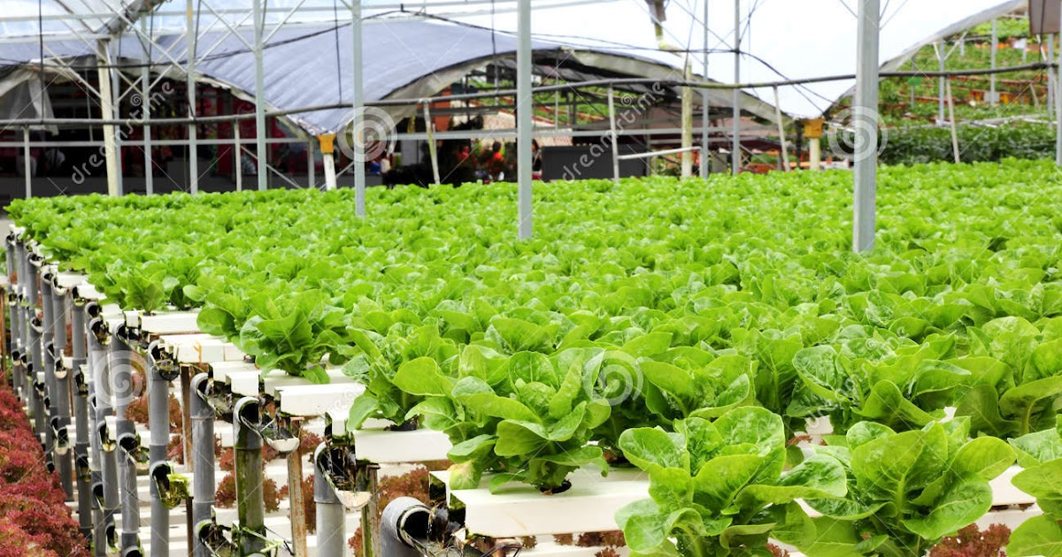 how to start a hydroponic farm business