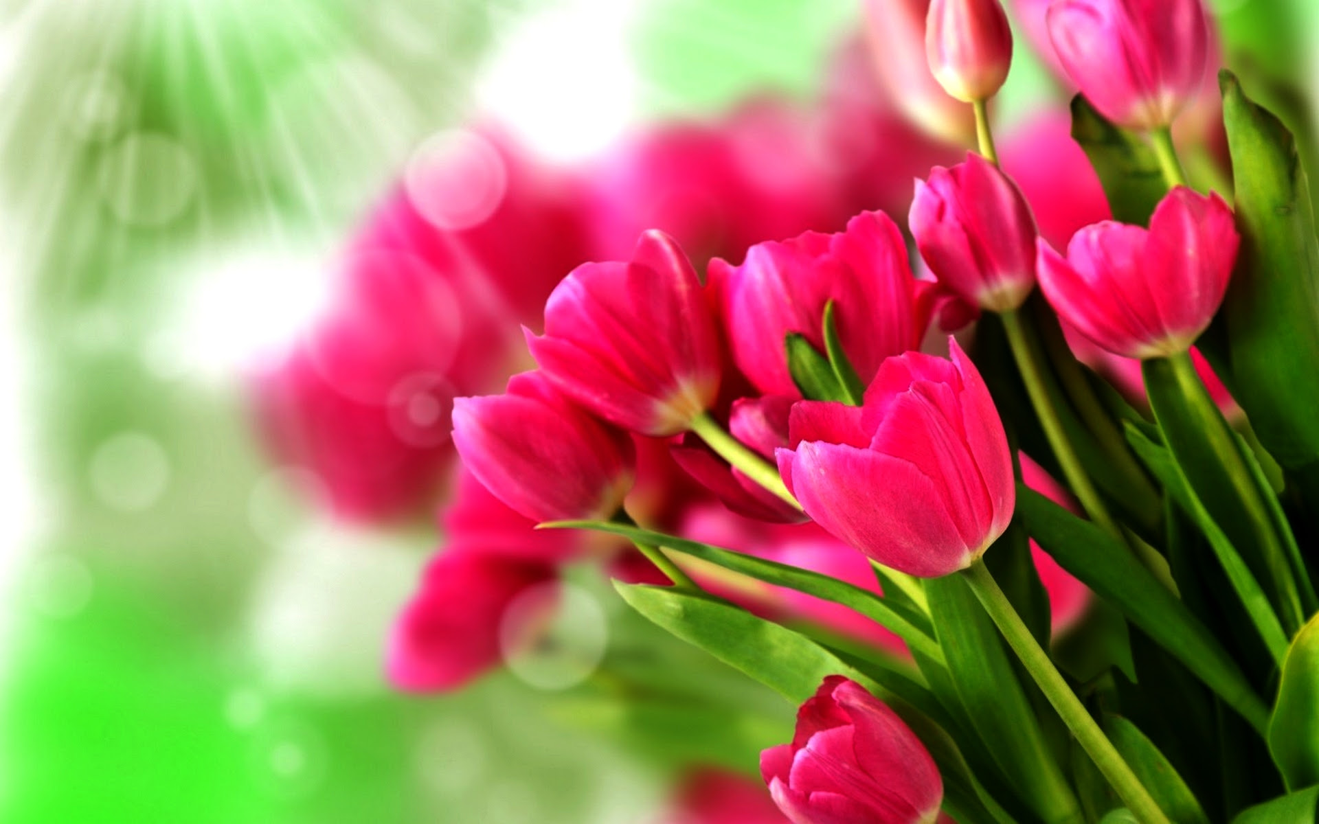 Flowers Images Tulips Hd Wallpaper And Background Photos 33698295