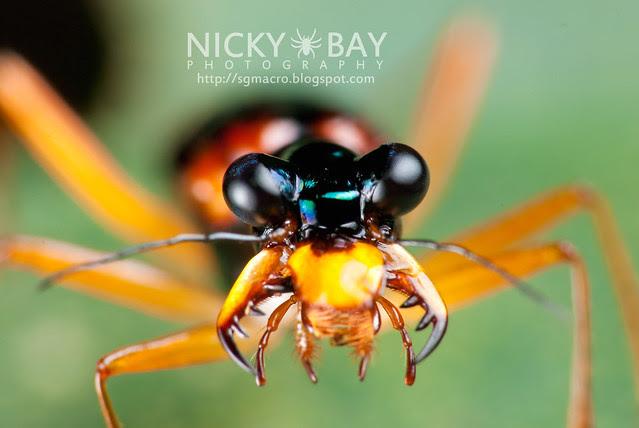 Tiger Beetle (Cicindelinae) - DSC_0652