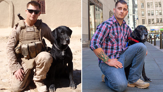 How an ex-military dog rescued the veteran who needed him most