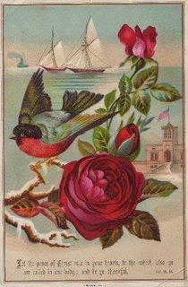 birdredblue001 A