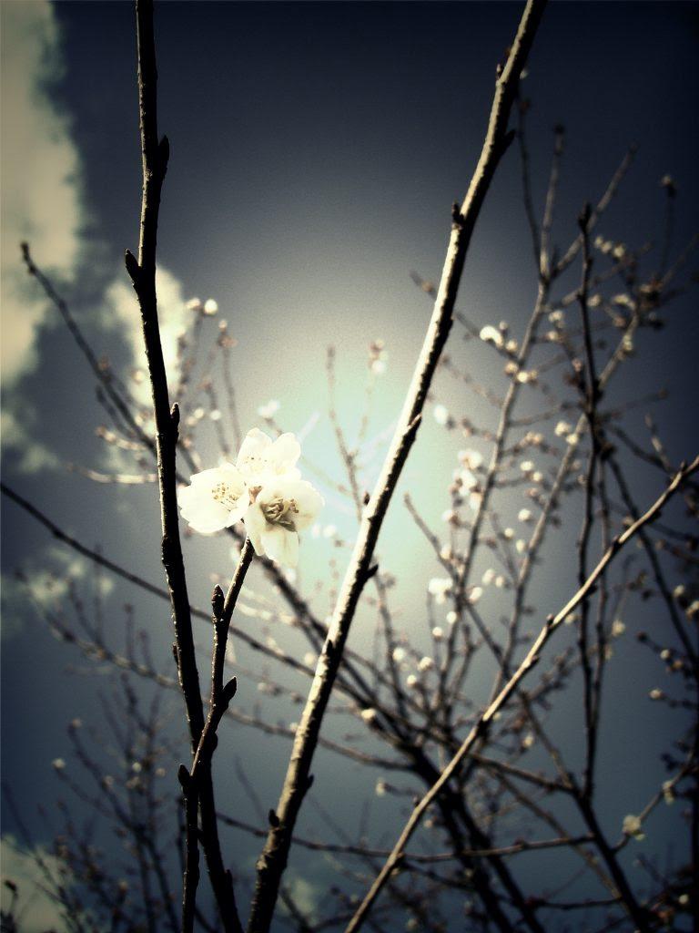 spring-blossom_Fotor_Fotor