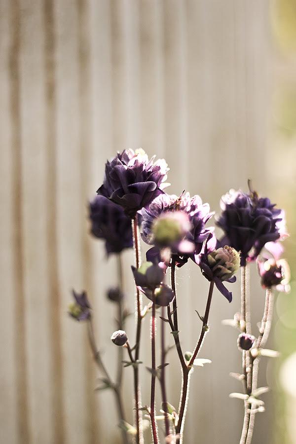 Lila-blommor
