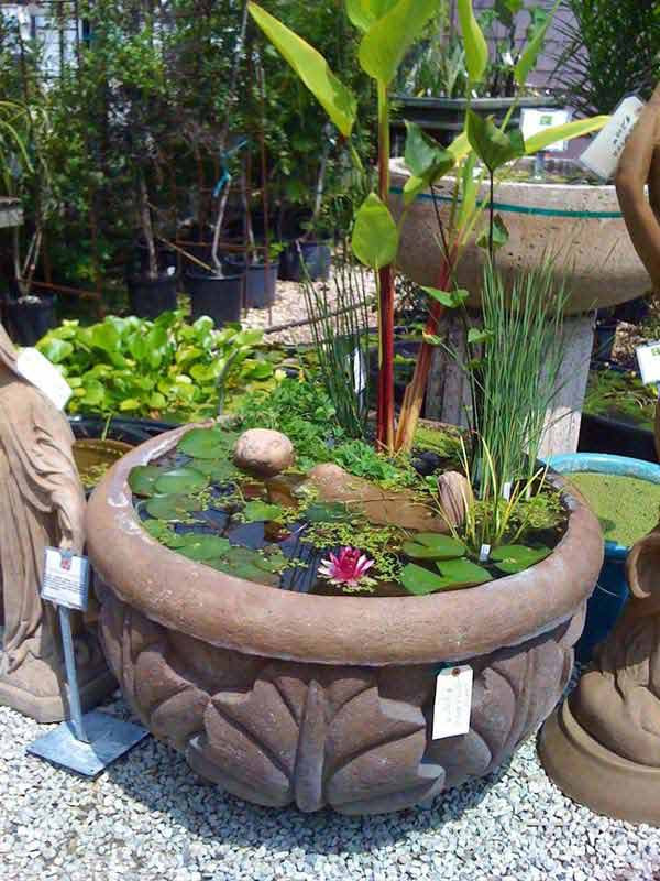AD-Mini-Pond-In-A-Pot-21