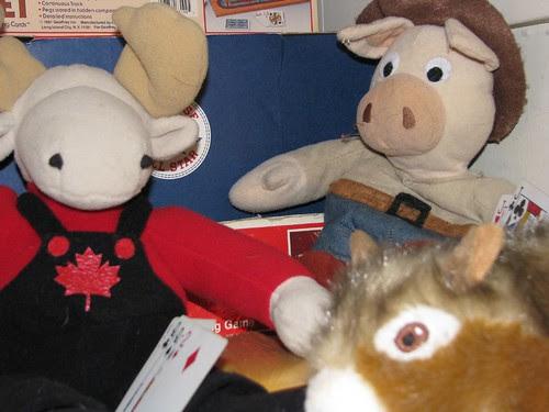 So far, Cowboy pig has seen no negative effects from Swine Flu