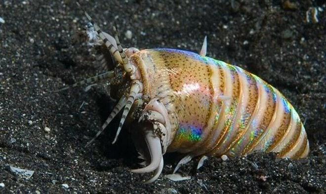 20 миллионов лет назад моря Евразии терроризировал гигантский двухметровый червь