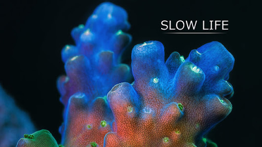 Breathtaking time-lapse video of marine life