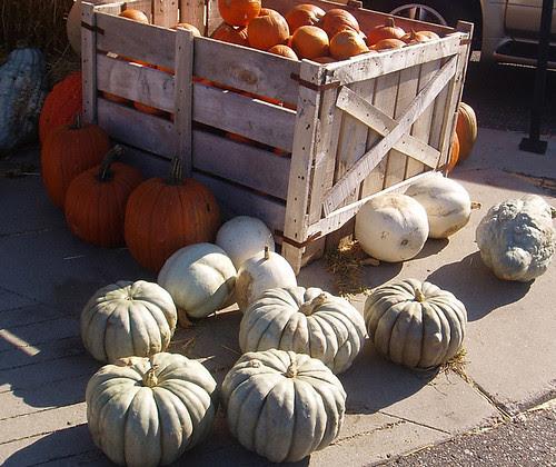 My last pumpkin post