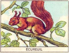 mart ecureuil