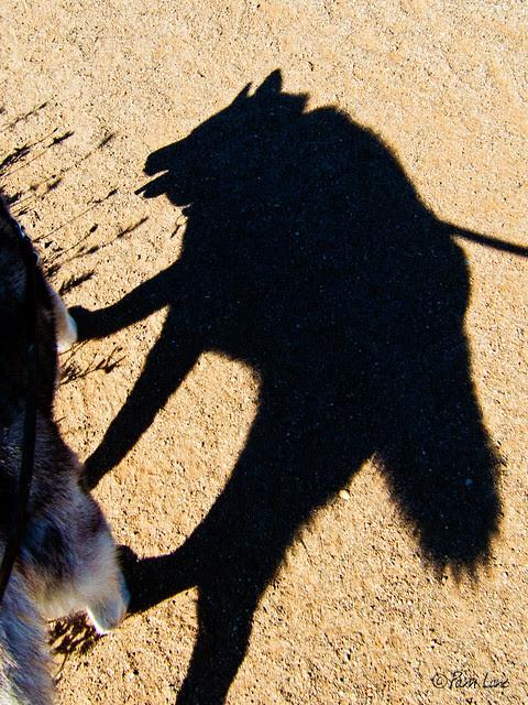 My wolf-dog