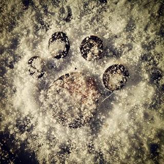 """the calm before the storm"" #snow covered #pawprint door mat #dogstagram #ilovemydogs #winterwonderland"