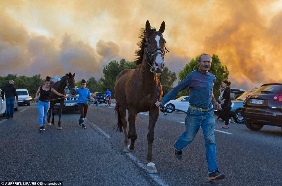 Pessoas evacuar seus cavalos de uma área perto Pennes-Mirabeau, onde as chamas estão fora de controle