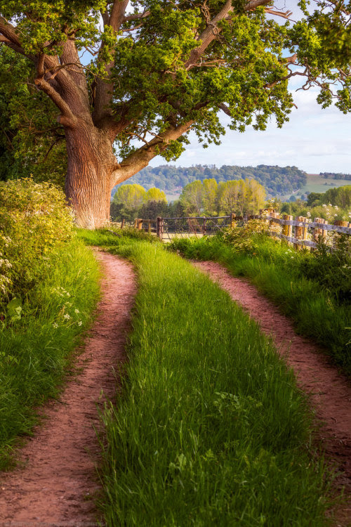 "outdoormagic: "" Country Lane, Leton, Hereford, Herefordshire, England by Joe Daniel Price """