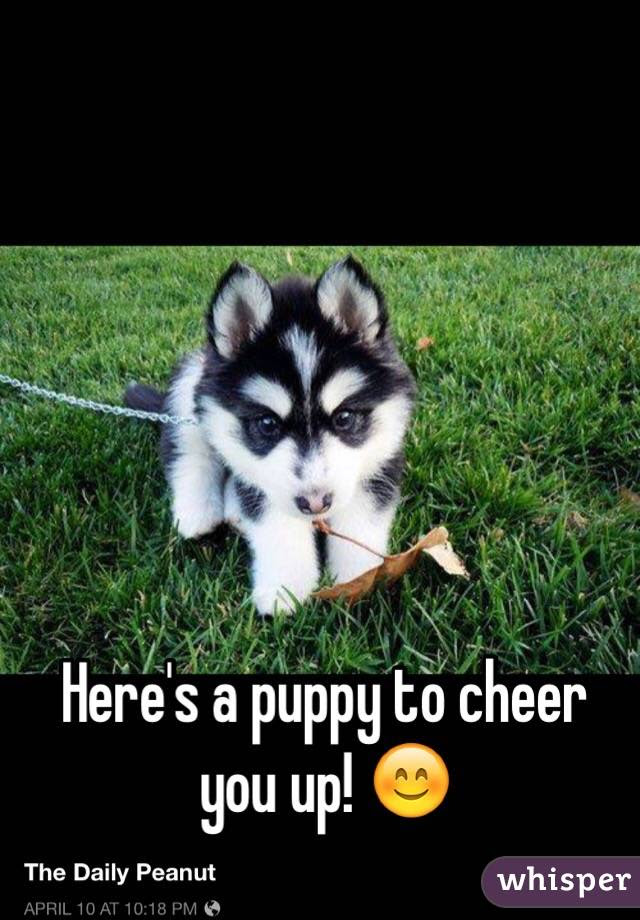 Heres A Puppy To Cheer You Up