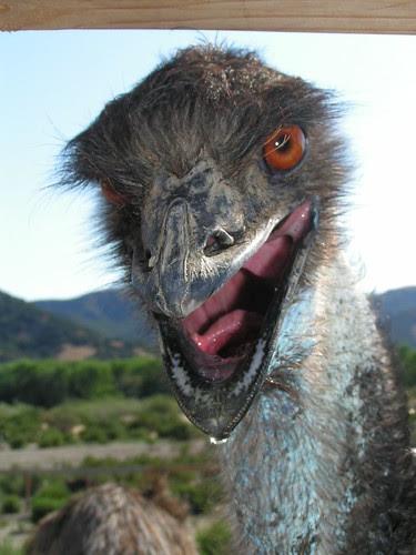 ostrich land 5