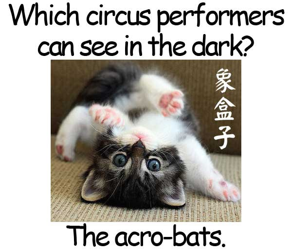 acrobat bat cat