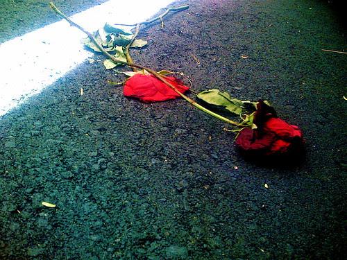 Turning Up Roses