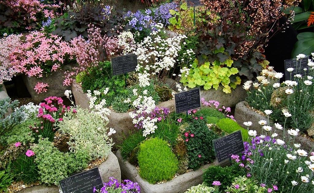 Cheap Nursery Plants Online Grevillea Robyn Gordon Hello