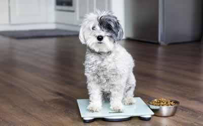 Top Tips for Pet Weight Loss | Bicester Vets