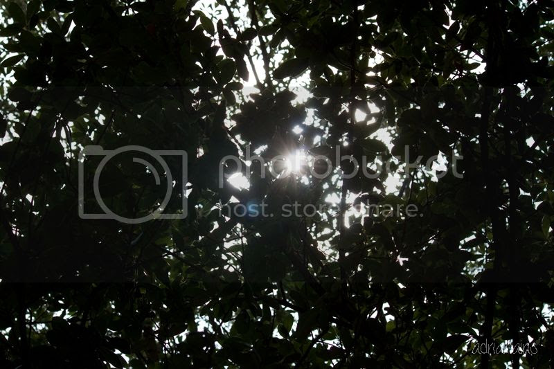 photo magnolia_zpsd7625c72.jpg