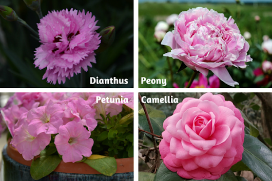 The Year In Color Pink | Flowers, Plants, Gardening | Blooming Secrets