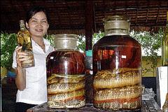 snake wine 4