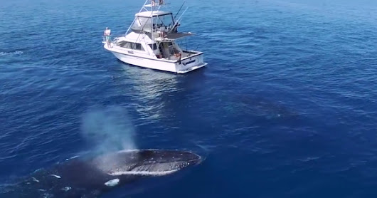 WATCH: A Majestic Whale Ballet Under an Unsuspecting Boat
